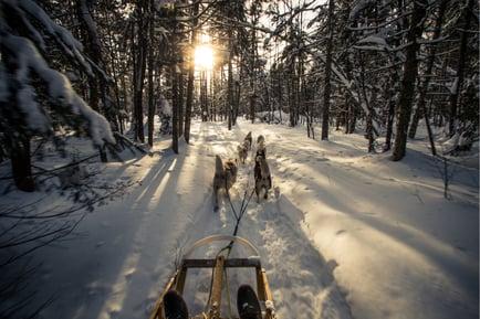 dogsled-dog-sledding-activities-winter